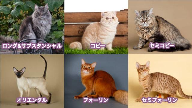 猫の体型6タイプ!(ロング&サブスタンシャル | コビー | セミコビー | フォーリン | セミフォーリン | オリエンタル)