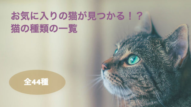 全44種 猫の種類の一覧