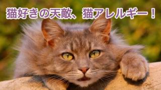 猫好きの天敵、猫アレルギー