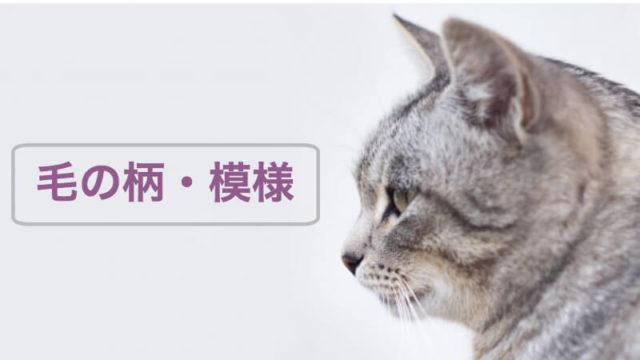 猫の毛の柄と模様を分類