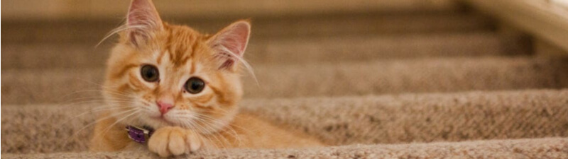 こっちを覗いている猫