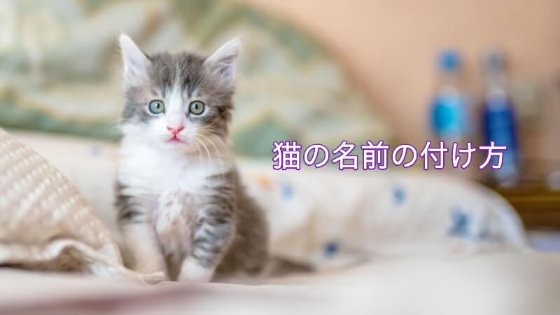 猫の名前の付け方