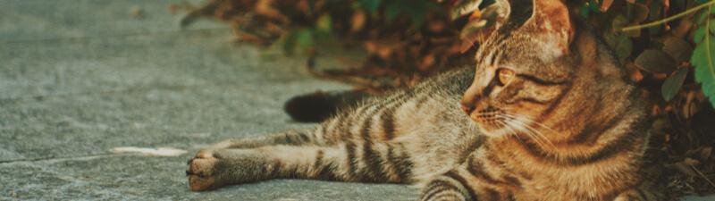 寛いでいる猫