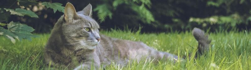 草原にいる猫