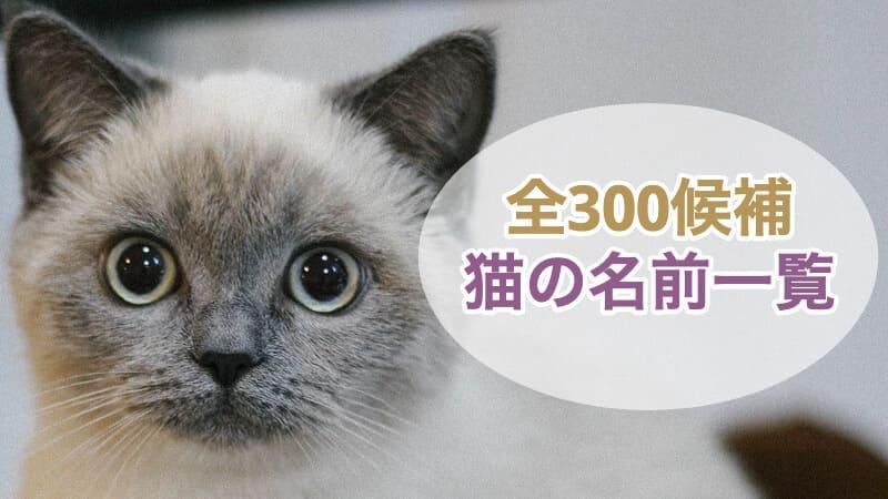 猫の名前一覧