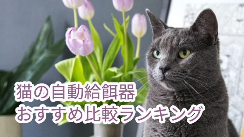 猫の自動給餌器おすすめ比較ランキング
