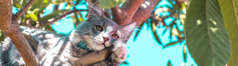 木の上でくつろぐ猫
